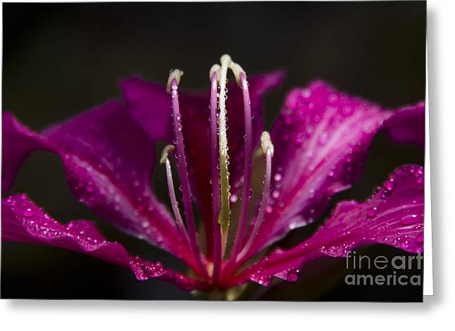 Pinks And Purple Petals Photographs Greeting Cards - To be blessed Greeting Card by Sharon Mau