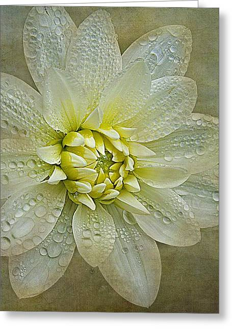 Raining Greeting Cards - To Be Gently Touched Greeting Card by CJ Anderson
