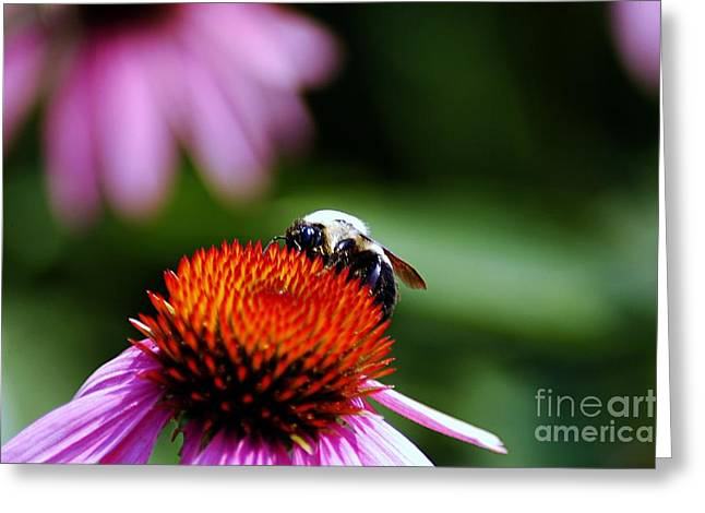 Bruster Greeting Cards - To Bee or Not To Bee Greeting Card by Clayton Bruster