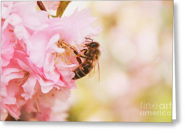 Flying Animal Greeting Cards - To Bee or not to Bee Greeting Card by Melanie Grass