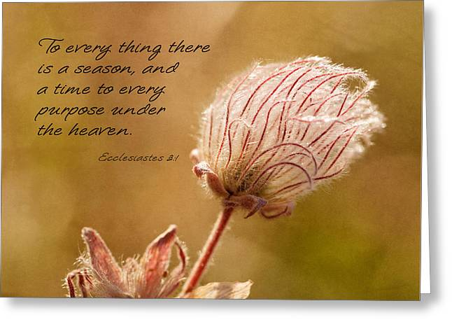 To Everything A Season Greeting Card by Mary Jo Allen
