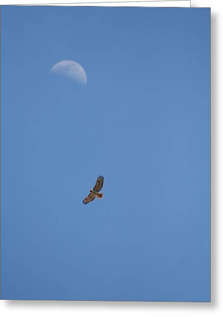 Turkey Buzzard Greeting Cards - To the Moon Greeting Card by Rachelle Johnston