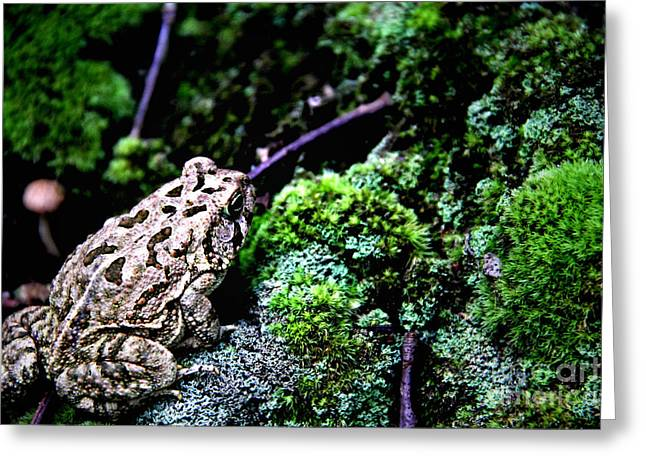 Moss Greeting Cards - Toad Greeting Card by P Jeff Smith