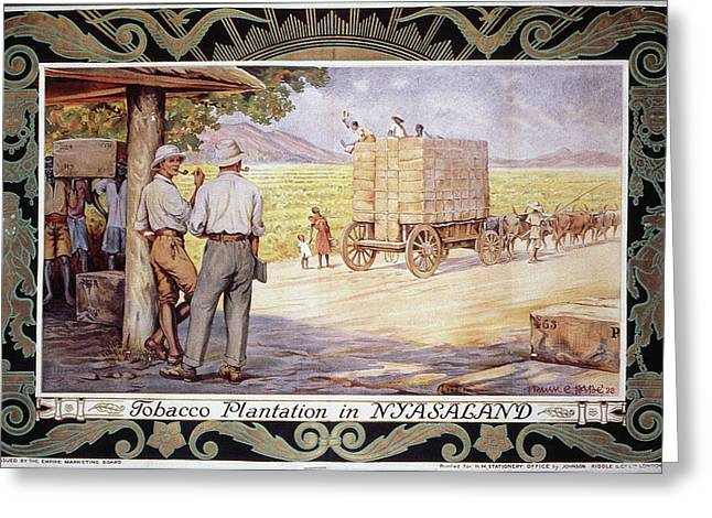 Slaves Greeting Cards - Tobacco Plantation Greeting Card by Granger