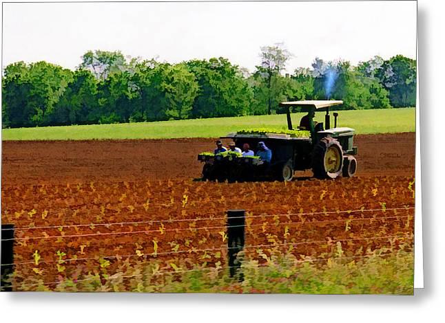 Farmlife Greeting Cards - Tobacco Planting Greeting Card by Sam Davis Johnson