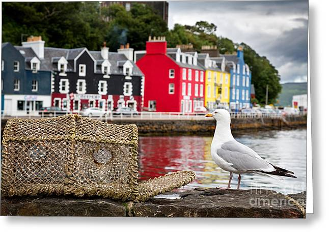 Tobermory Seagull Greeting Card by Jane Rix