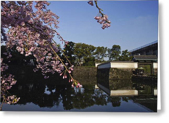 Flower Blossom Greeting Cards - Tokyo Imperial Palace Cherry Blossoms Greeting Card by Brian Kamprath