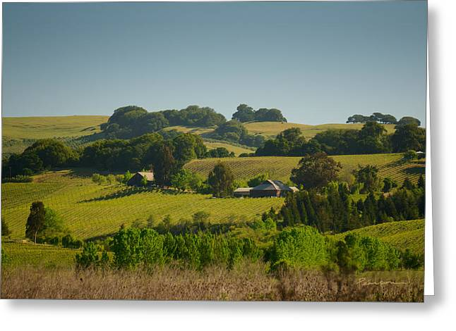 Tolay Lake Vineyard Greeting Card by Catherine Pearson