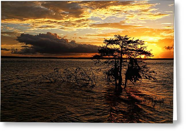 Toledo Bend Sunset Greeting Card by Judy Vincent
