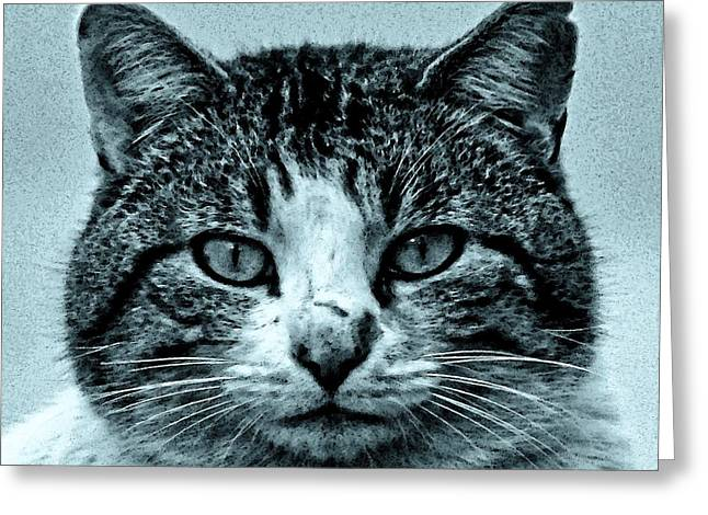 Tom Cat Greeting Cards - Tom Cat Greeting Card by Tony Grider
