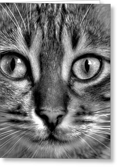 Tom Cat Greeting Cards - Tom Greeting Card by Russell Styles