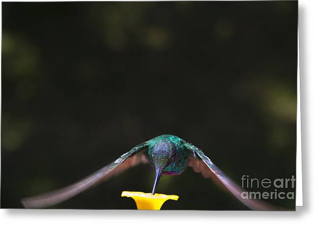 Hovering Greeting Cards - Tom Thumb - Up Close and Personal II Greeting Card by Al Bourassa