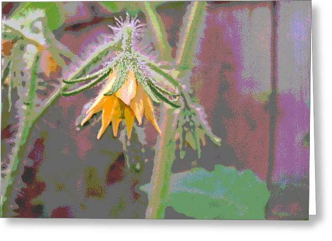 Padre Art Greeting Cards - Tomato Blossom Greeting Card by Padre Art