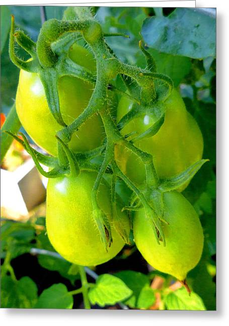 Organic Greeting Cards - Tomato on Trees 7 Greeting Card by Lanjee Chee