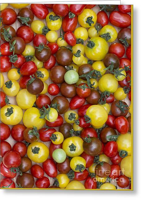 Rounded Circular Greeting Cards - Tomatoes  Greeting Card by Tim Gainey