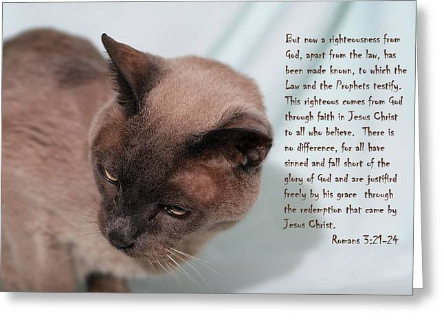 Tonkinese Cat Greeting Cards - Tonkinese Cat Romans 3 v 21-24 Greeting Card by Linda Phelps