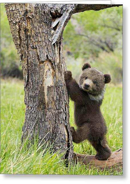 Climbing Greeting Cards - Too cute for words Greeting Card by Melody Watson