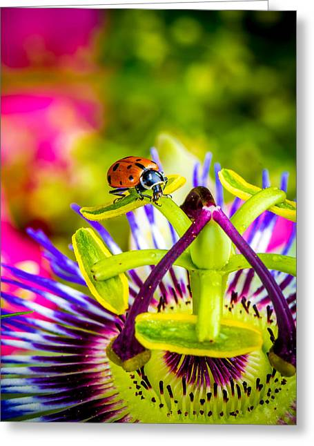 Ladybugs Greeting Cards - Too much of heaven Greeting Card by TC Morgan