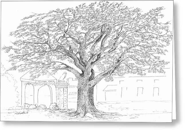 Florida State Drawings Greeting Cards - Toomers Oaks Greeting Card by Barney Hedrick