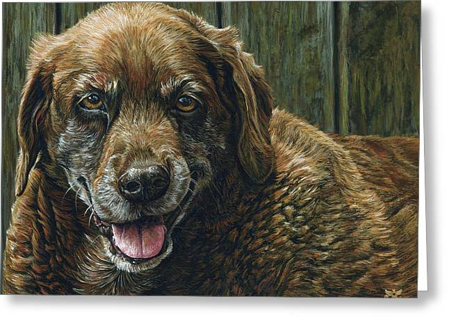 Chocolate Lab Greeting Cards - Tootsie Greeting Card by Cara Bevan