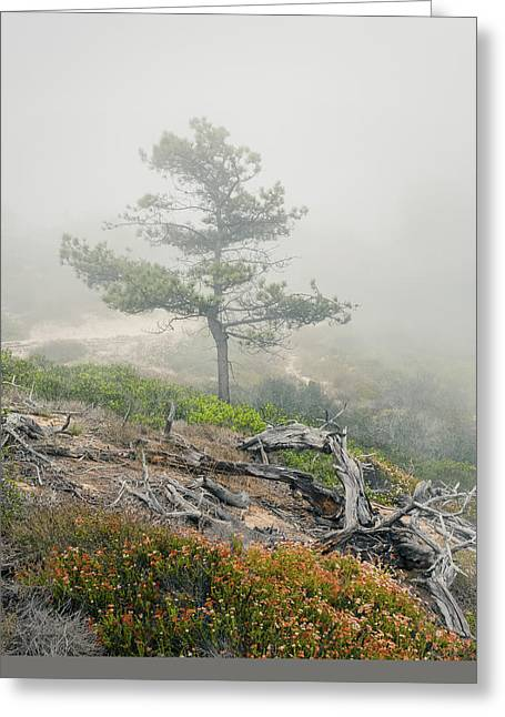 Layers Greeting Cards - Torrey Pine Greeting Card by Joseph Smith