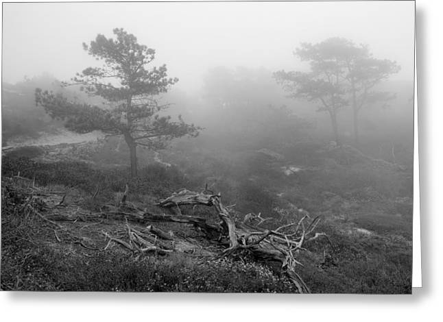 Layers Greeting Cards - Torrey Pines in Fog Greeting Card by Joseph Smith