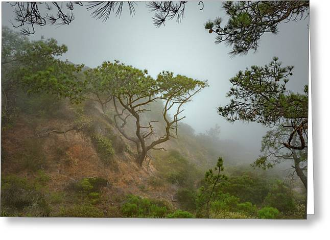 Torrey Pines Marine Layer Greeting Card by Joseph Smith