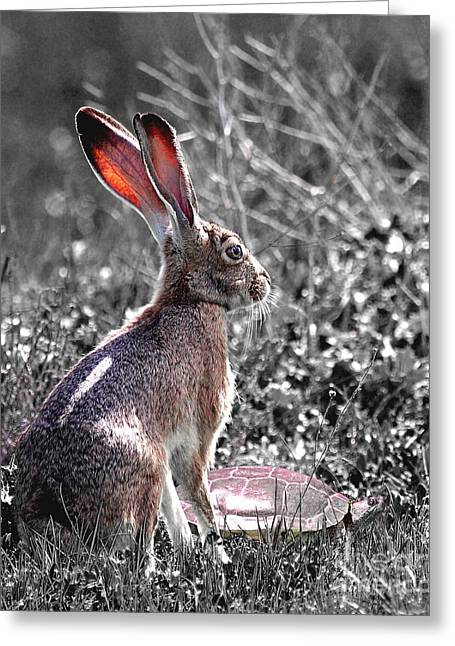 Animals Art Greeting Cards - Tortoise and the Hare Greeting Card by Animals Art