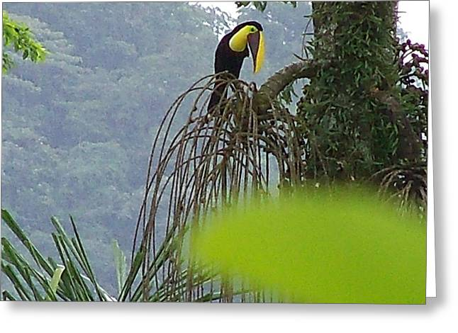 Toucan Print Greeting Cards - Toucans Lunch Greeting Card by William Patterson