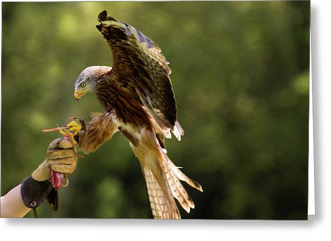 Red Kite Greeting Cards - Touch Down Greeting Card by Angel  Tarantella