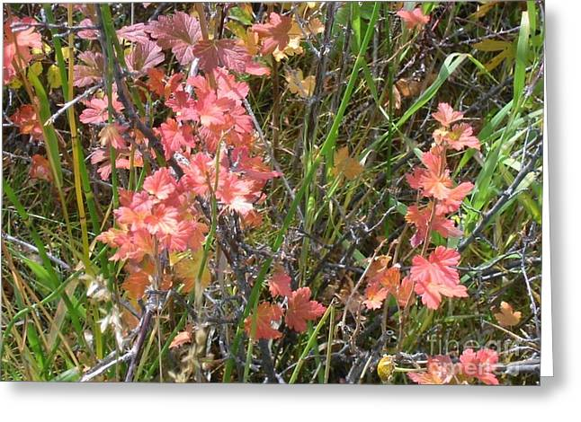 Fall Grass Greeting Cards - Touch of Autumn Greeting Card by Lorita Montgomery