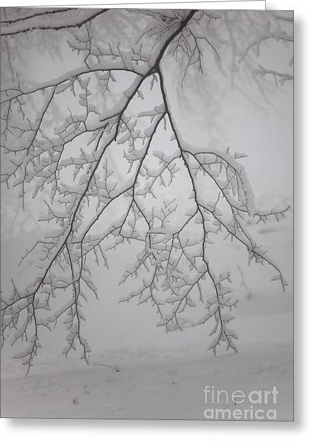 Snowy Day Greeting Cards - Touch the ground Greeting Card by Gabriela Insuratelu