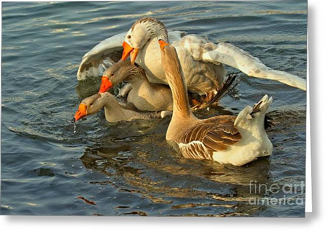 Toulouse Goose Clusterduck Greeting Card by Adam Jewell