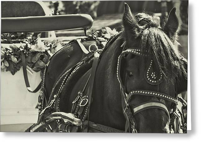 Buggy Whip Greeting Cards - Tour By Buggy Greeting Card by JAMART Photography
