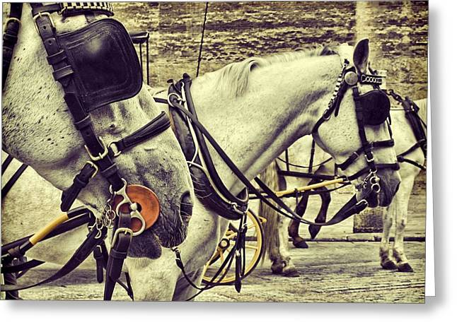 Horse Driven Wagon Greeting Cards - Tour Spain Greeting Card by JAMART Photography