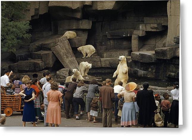 Mid Adult Women Photographs Greeting Cards - Tourists Watch Captive Polar Bears Greeting Card by B. Anthony Stewart