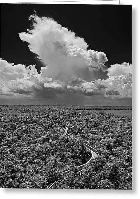 Mangrove Forest Greeting Cards - Tower View West Greeting Card by Robert Grauer