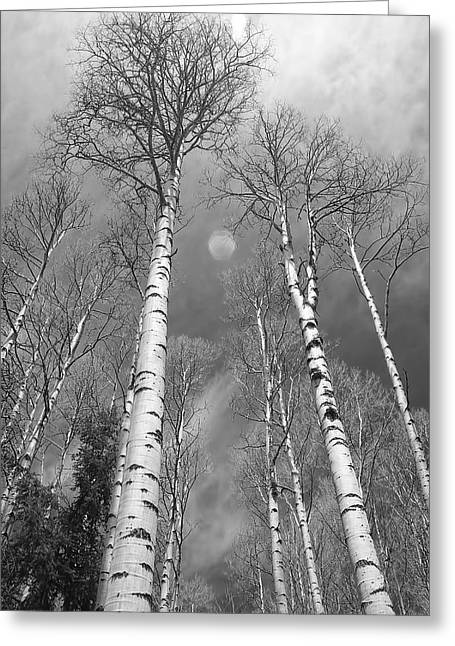 Striking Images Greeting Cards - Towering Aspen Trees in Black and White Greeting Card by James BO  Insogna