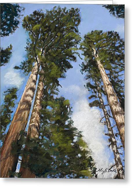 Height Pastels Greeting Cards - Towering Sequoias Greeting Card by Mary Benke