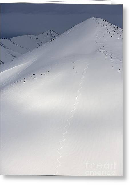 Downhill Skiing Greeting Cards - Tracks of a Telemark Skier Greeting Card by Tim Grams