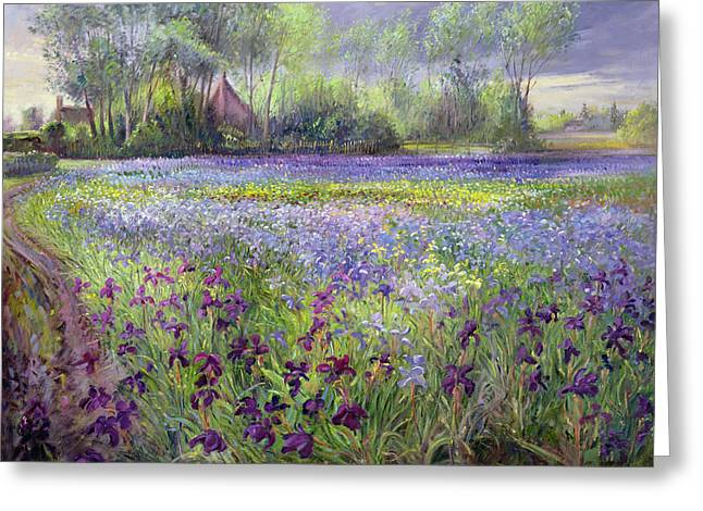 Irises Greeting Cards - Trackway past the Iris Field Greeting Card by Timothy Easton