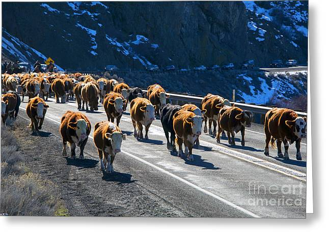 Traffic Jam Greeting Card by Mike Dawson