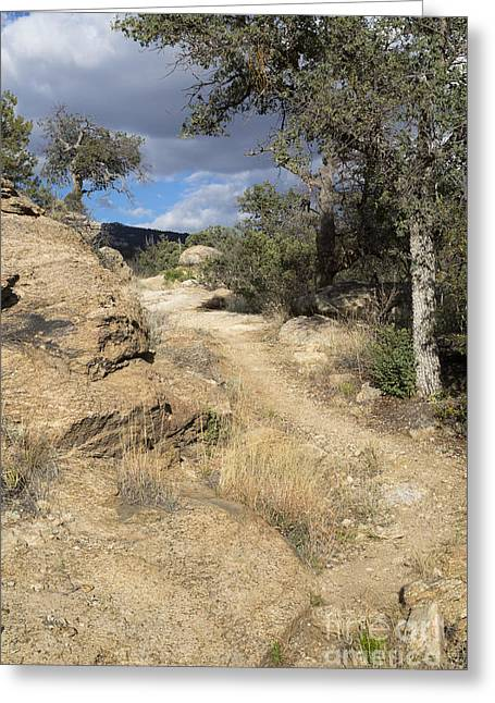 Rincon Greeting Cards - Trail Climbing Mica Mountain Greeting Card by Mike Cavaroc