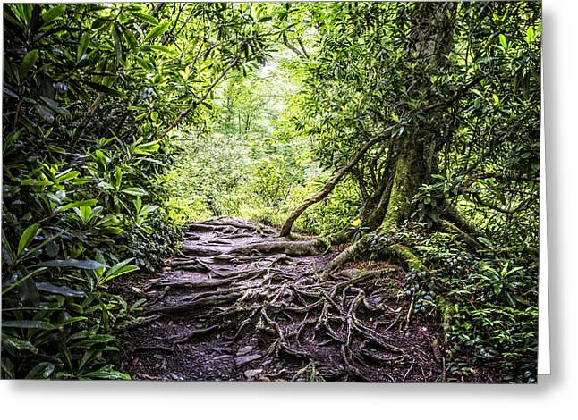 Tennessee River Greeting Cards - Trail in the Forest Greeting Card by Debra and Dave Vanderlaan