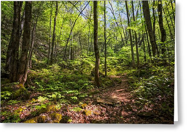 Fall Colors Greeting Cards - Trail into the Forest Greeting Card by Debra and Dave Vanderlaan