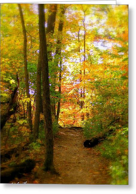 Indiana Landscapes Greeting Cards - Trailhead Light Greeting Card by Ed Smith