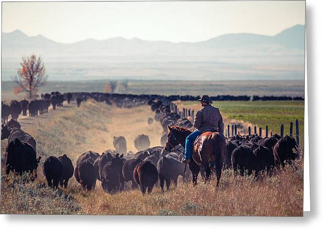 Trailing The Herd Greeting Card by Todd Klassy
