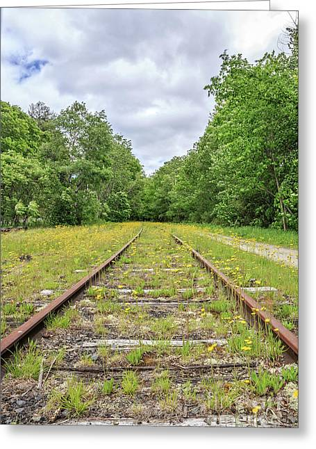Train Tracks And Wildflowers Greeting Card by Edward Fielding