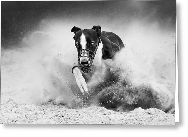 Greyhound Greeting Cards - Training Greyhound Racing Greeting Card by Muriel Vekemans