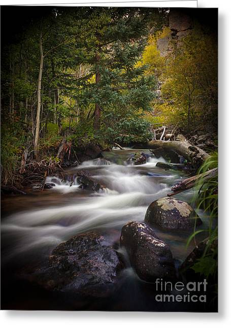 Beautiful Creek Greeting Cards - Tranquil Flow Greeting Card by Steven Reed